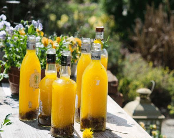 Вино из одуванчиков – готовим целебный напиток