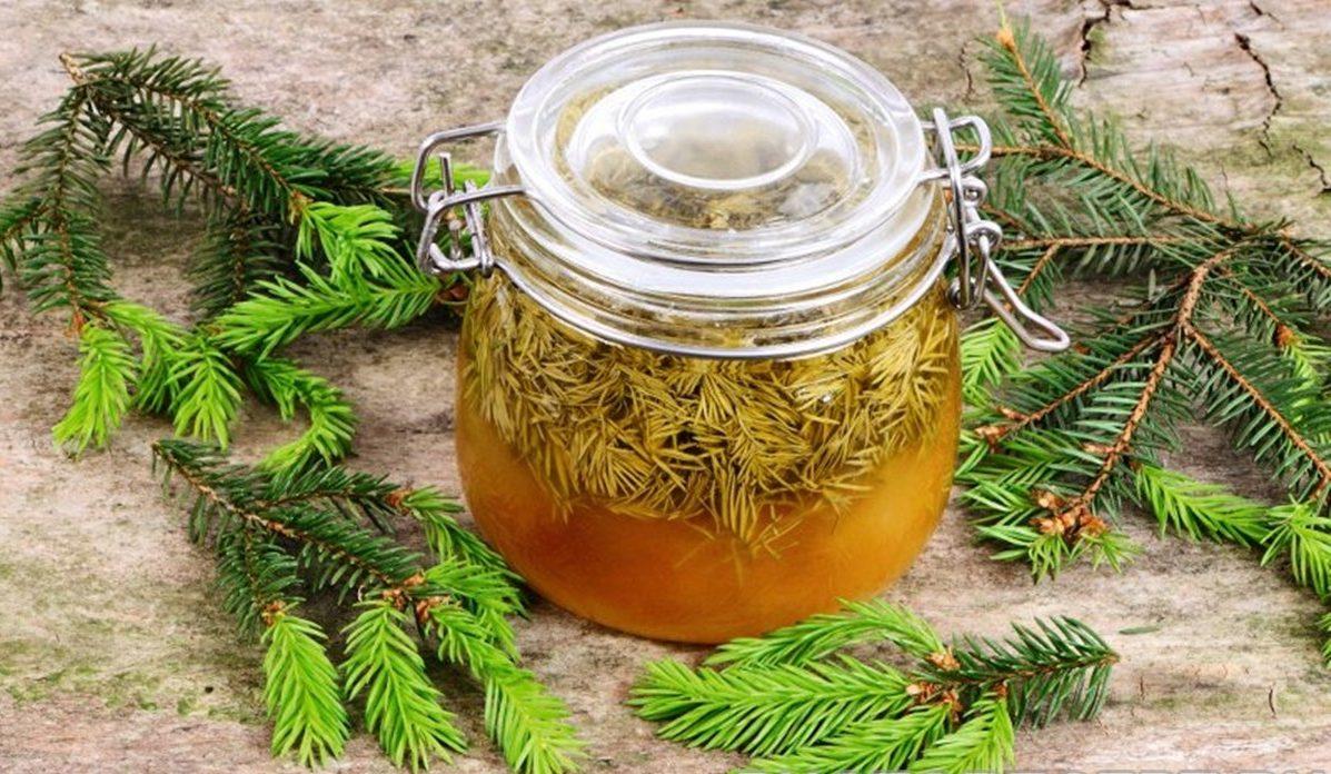 Лесной еловый сироп от кашля