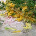 Тандем морковки и кабачка