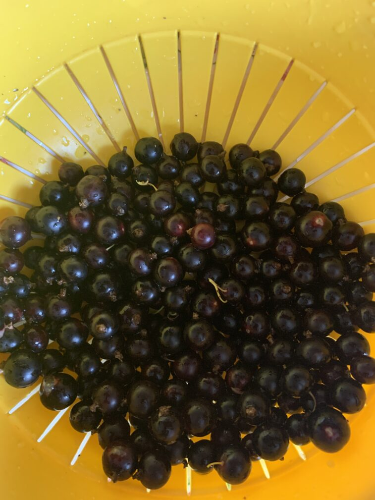 Фото рецепта - Черная смородина, протертая с сахаром (заготовка на зиму) - шаг 2