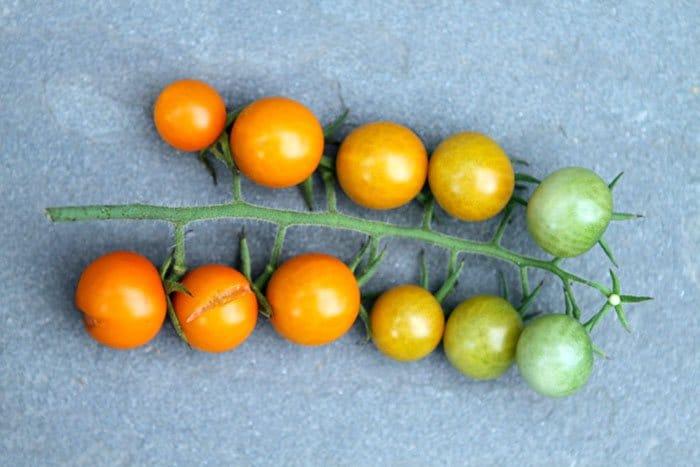 Фото рецепта - Овощной салат с анчоусами и мятой - шаг 1