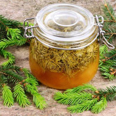 Лесной еловый сироп от кашля - рецепт с фото